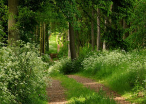 Country Path Summer Forest